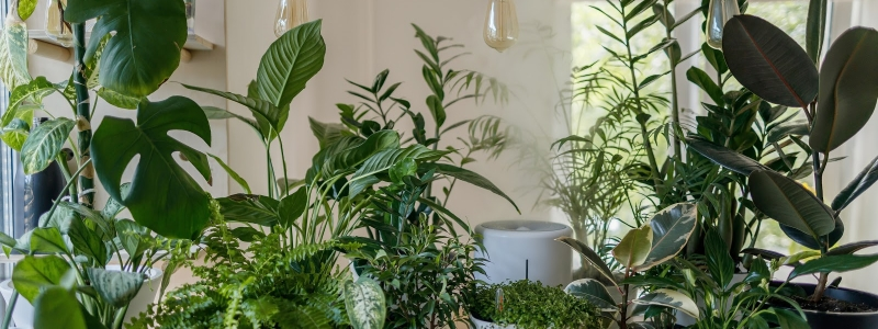 How to Enjoy your Houseplants while Reducing Asthma and Allergy Symptoms